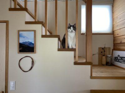 山暮らしの家 キャットタワー的階段