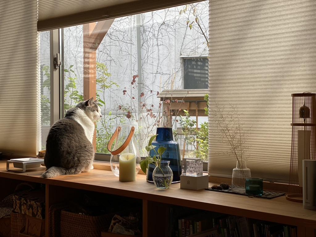 山暮らしの家 猫